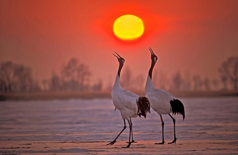 WEI YE White crane rising sun