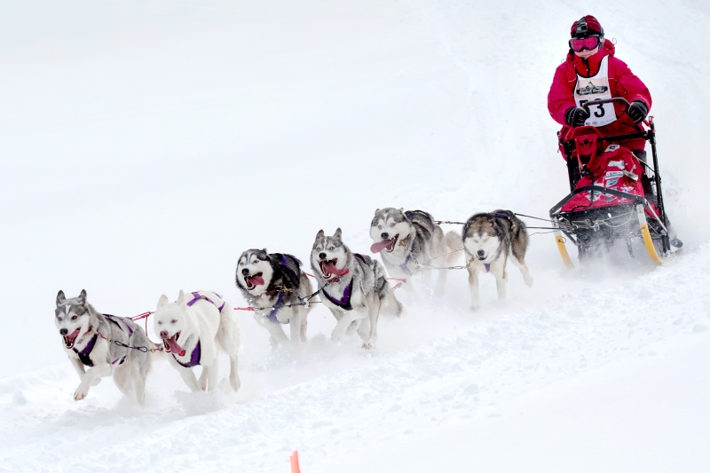 Peter Lee Dog Sled Race D08