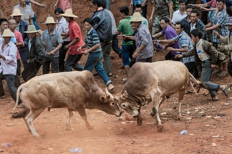 JURONG YU On the bullring
