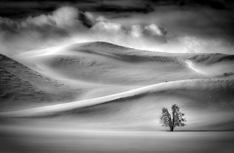 Hayden Valley In Winter, Hunter  Gary , Usa