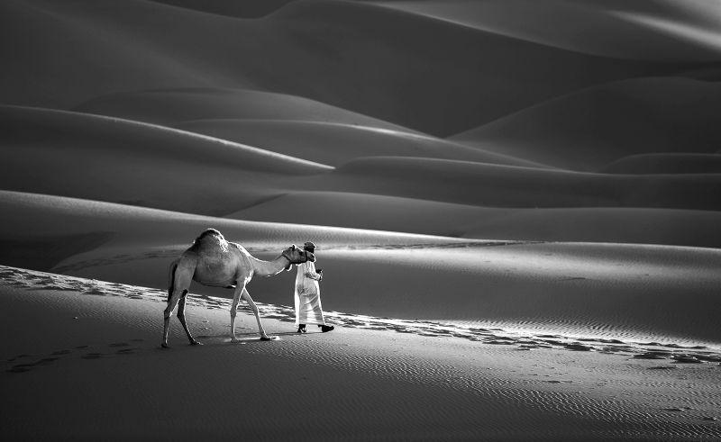 Desert With Camel    2, Al-qazwini  Bahaadeen , Kuwait