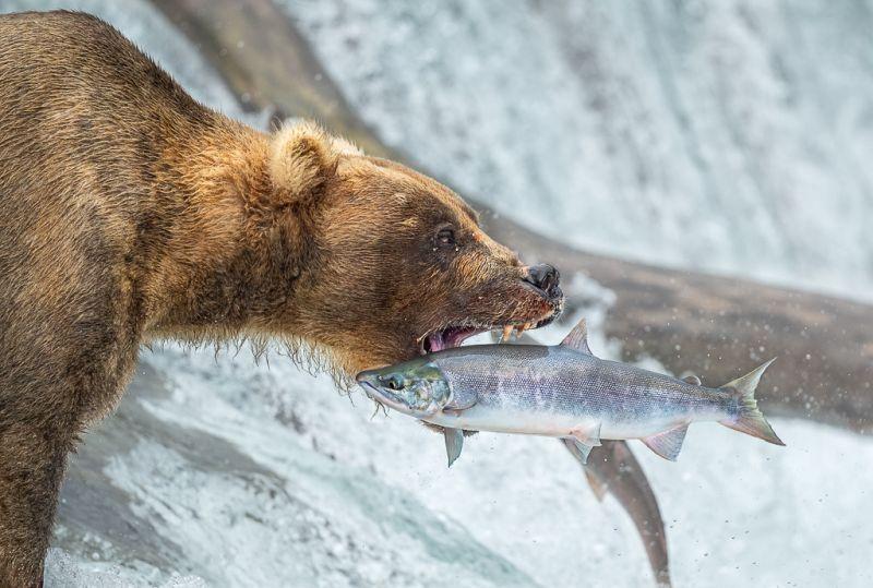 Fishing 4, Vijayan  Thomas , Canada