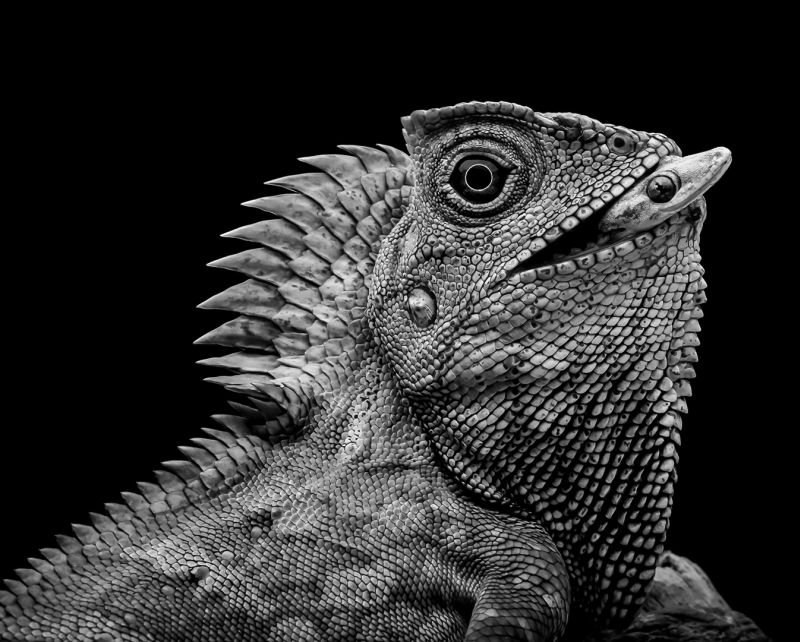 Lizard & Gecko, Lee  Meng Chew , Singapore
