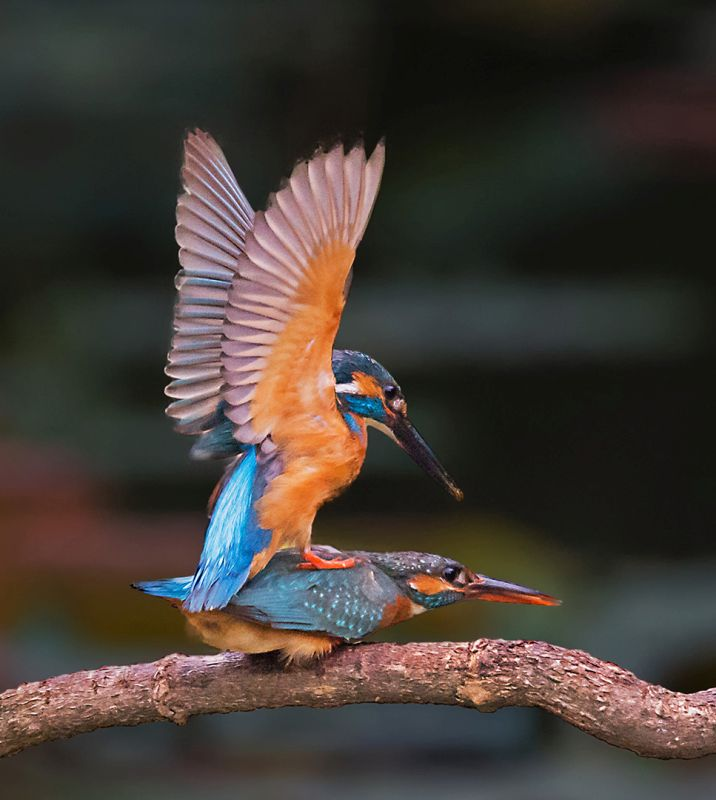 Kingfisher 07, Lee  Ching-hsiung , Taiwan