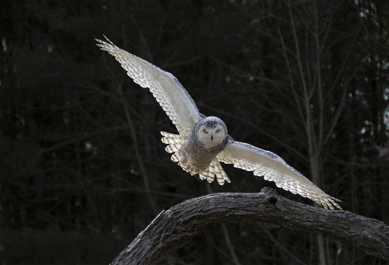 Flying, Vu  Anna , Usa