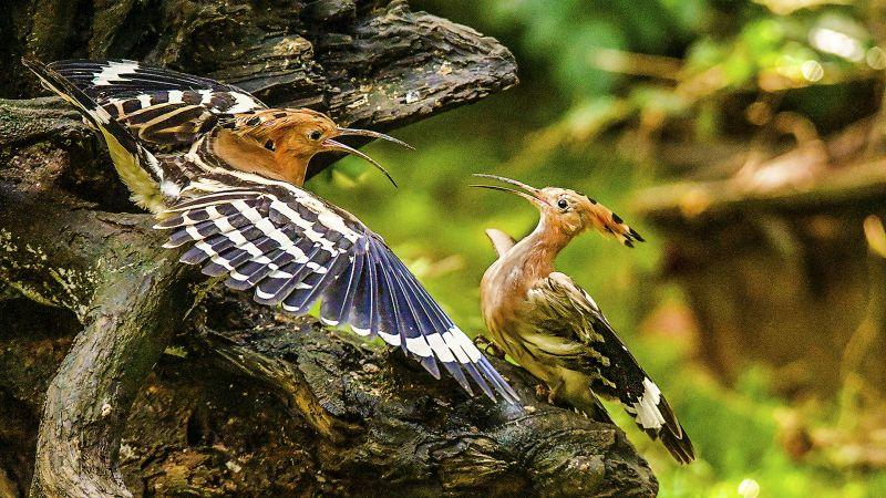 Two Birds, Hla  Richard , Hong Kong