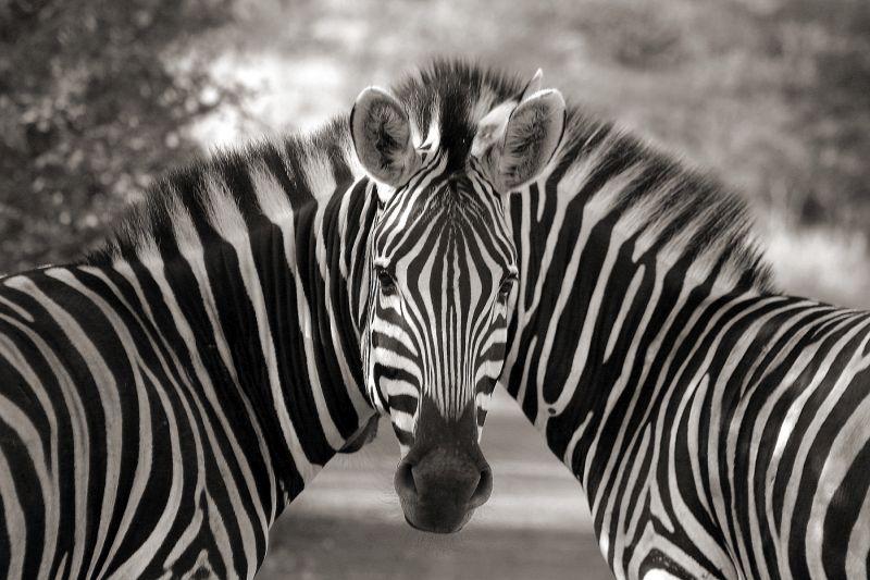 Cloning Wildlife ?, Feistel  Michael , South Africa