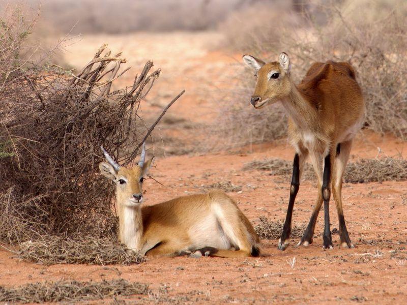 Namibian Morning Still Life, Pence  Christine Cope , Usa