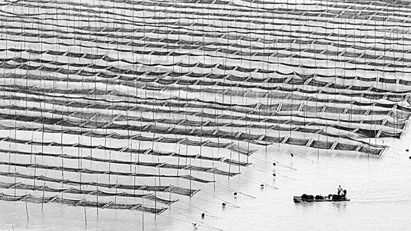 Paddy Field 02, Chan  H. W. , Hong Kong