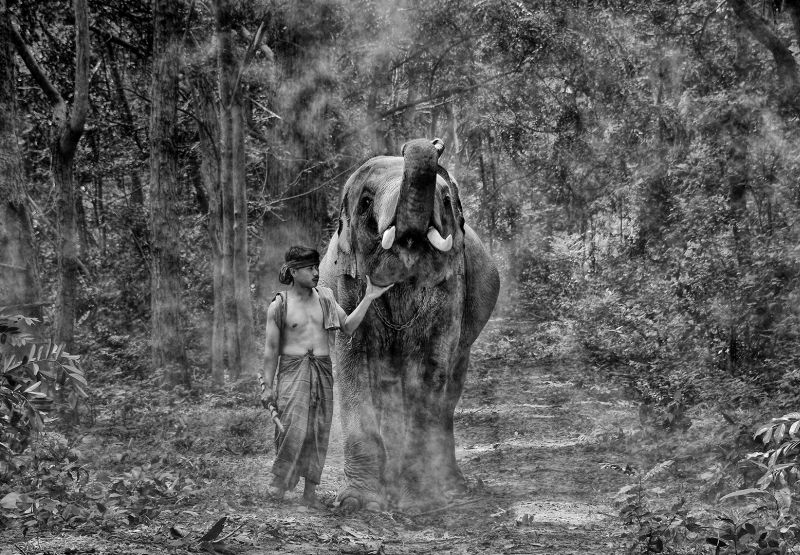 Elephant And Mahout Stop, Tan  Lee Eng , Singapore
