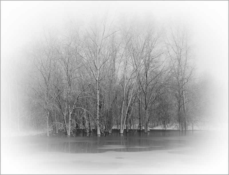 Trees In Floods And Fog, Pacton  Greg , Usa