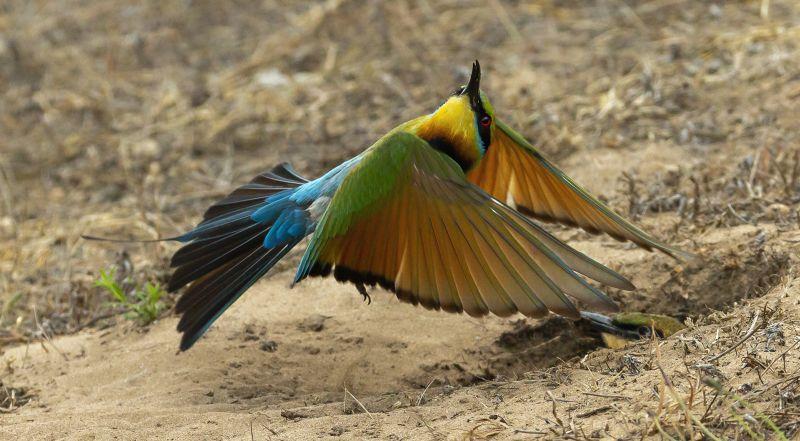 Protect The Nest, Ryan  Peter , Australia