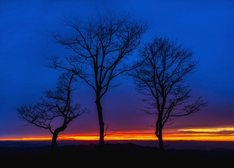 Three Tree Sunrise, Weaver  Ken , Usa