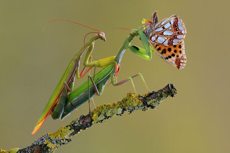 Eatting A Butterfly, Van Mensel  Dre , Belgium