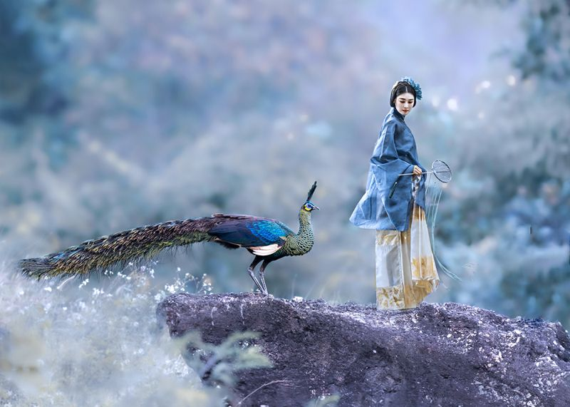 The Peacock And The Beauty, Tong  Jiangchuan , China