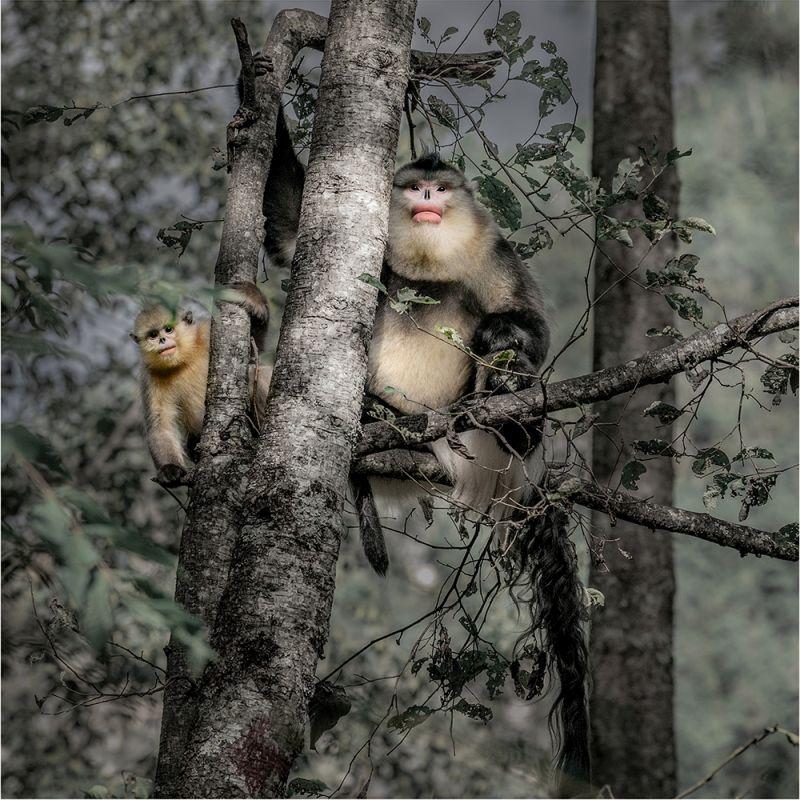 Keep Watch, Tong  Jiangchuan , China