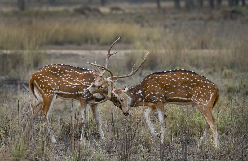 Sibling Fight 1, Mitra  Piyali , India