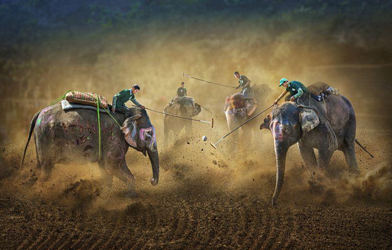 Chitwan Elephant Festival 2, Che  Arnaldo Paulo , Hong Kong