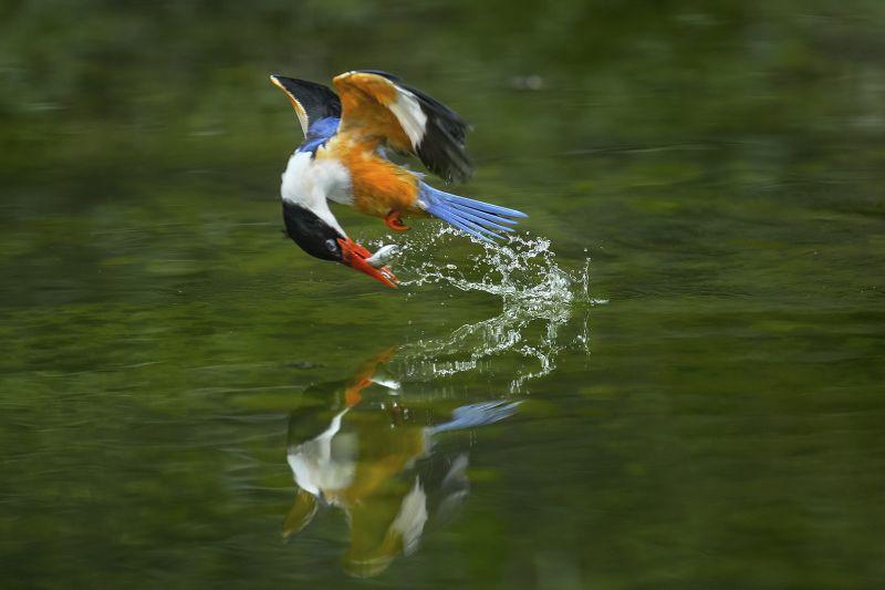 Kingfisher 5, Che  Arnaldo Paulo , Hong Kong