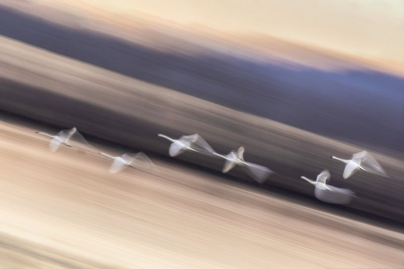Fly Away, Kong  Lai Wah , Usa