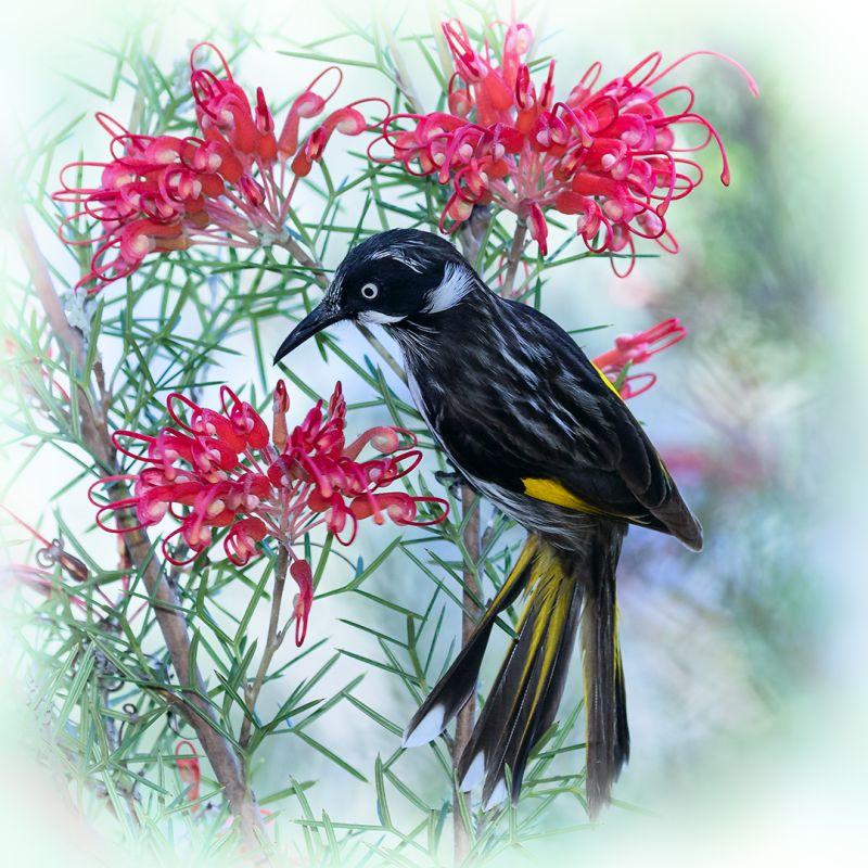 Among The Flowers, Bassett  David , Australia