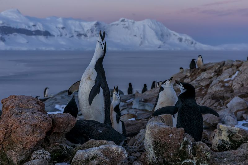 NAT_Antartic_penguin_colony_sunset, Zas Espinosa  Juan , Spain