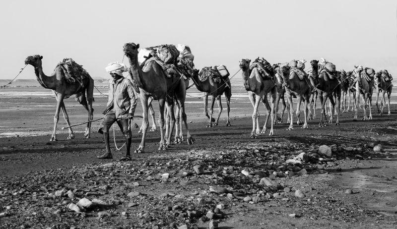 Long Camel Line, Chapman  John , Australia