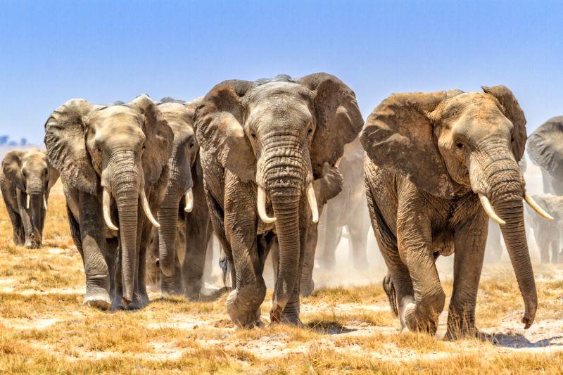 Amboseli Elephants 3, Law  Kai Hay Clement , Hong Kong