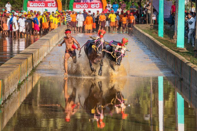 The Wild Run, Chakraborty  Anupam , India