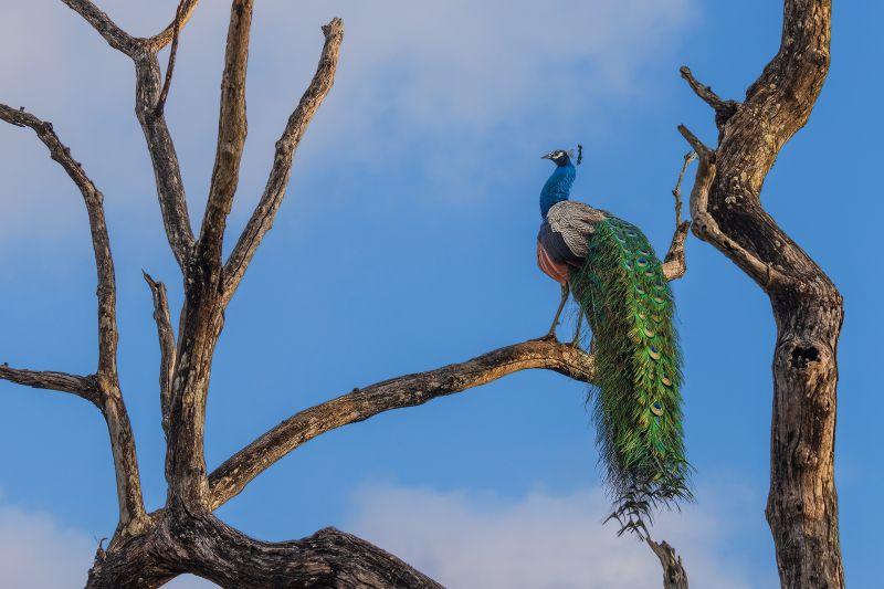 Wonder Of Nature, Chakraborty  Anupam , India