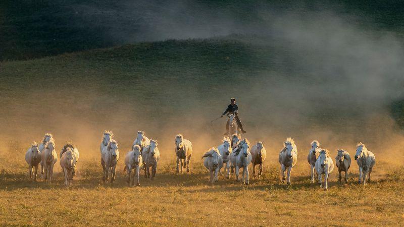 Urge Horses Forward 3, Chen  Kunping , China