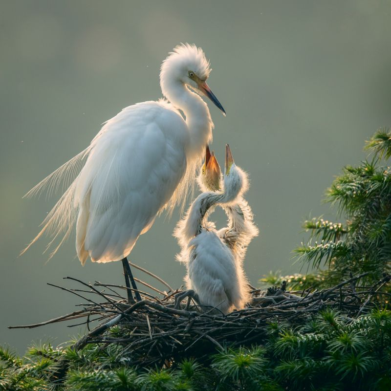 Egret-wait For Food, Chen  Kunping , China