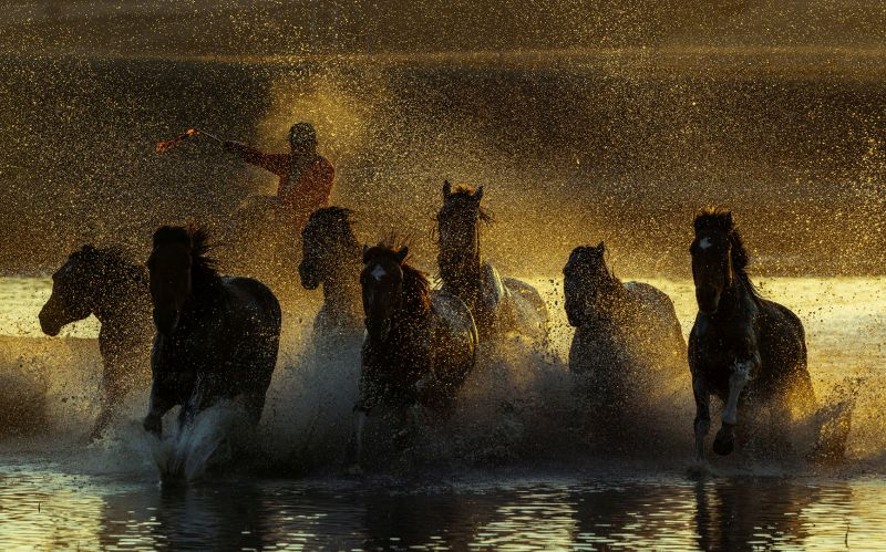 Horses Compete, Mao  Yafeng , China