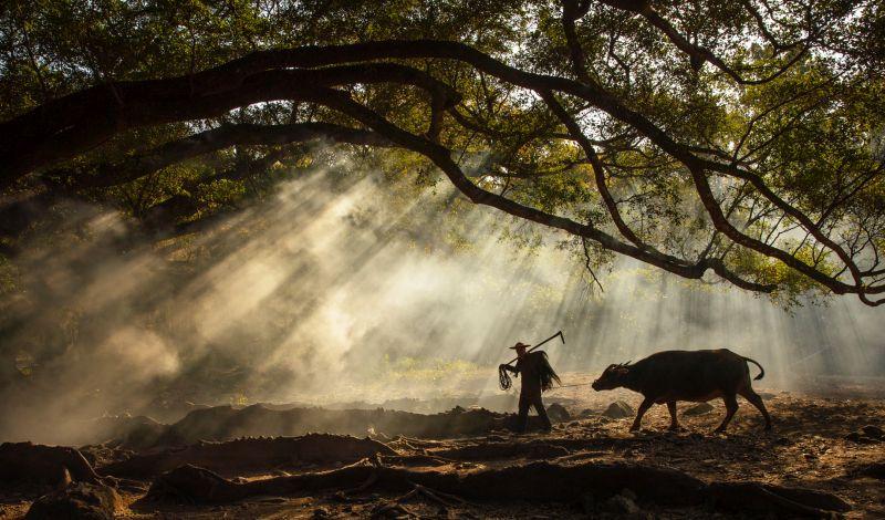 Cattleman 2, Deng  Youdong , China
