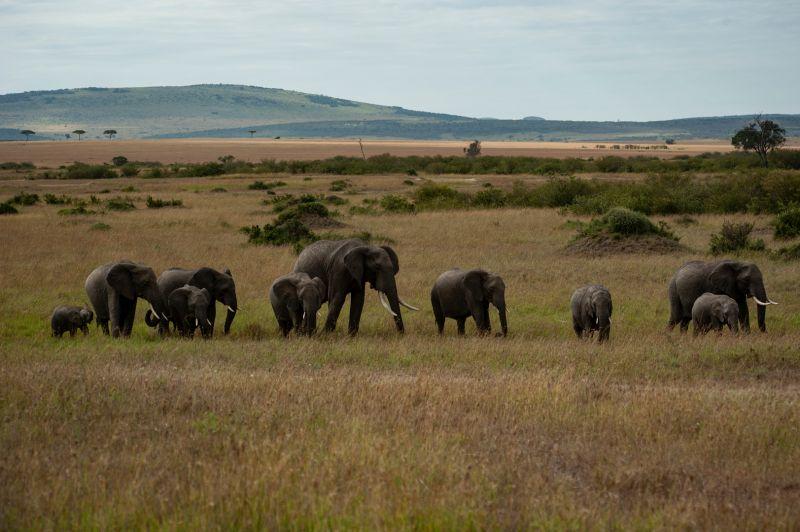 The Elephants Family, Mei  Long , China