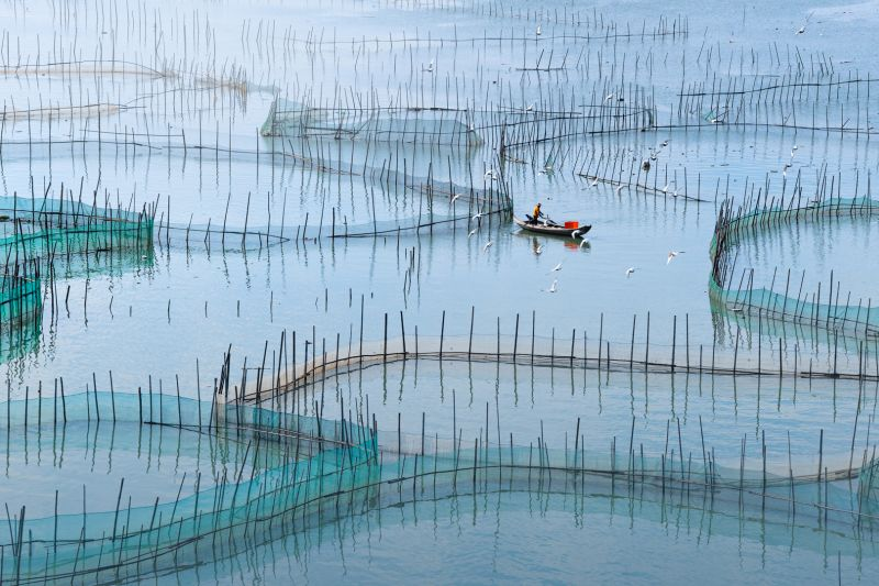 Mariculture, Wang  Hongshan , China