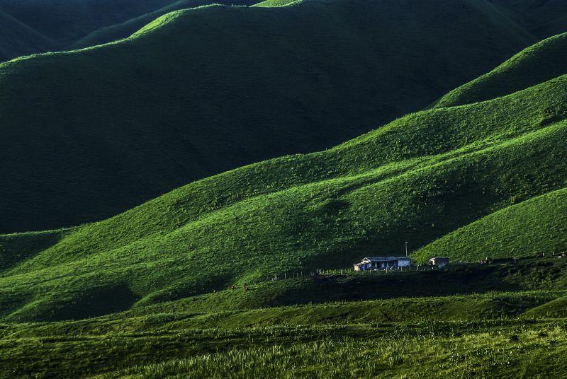 Grassland In Summer, Xu  Xiaomei , China