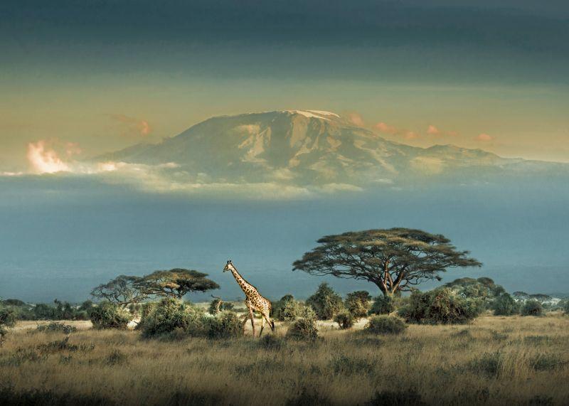 Dusk Of Kilimanjaro, Li  Jianping , China