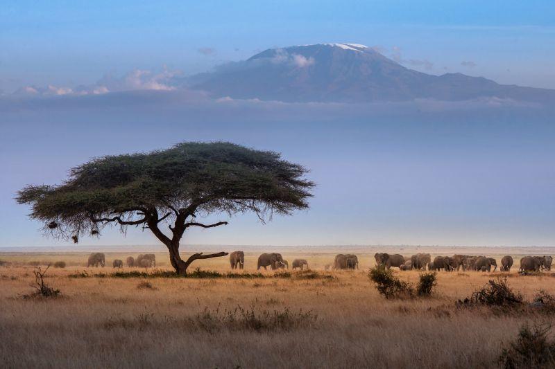 Kilimanjaro, Li  Jianping , China