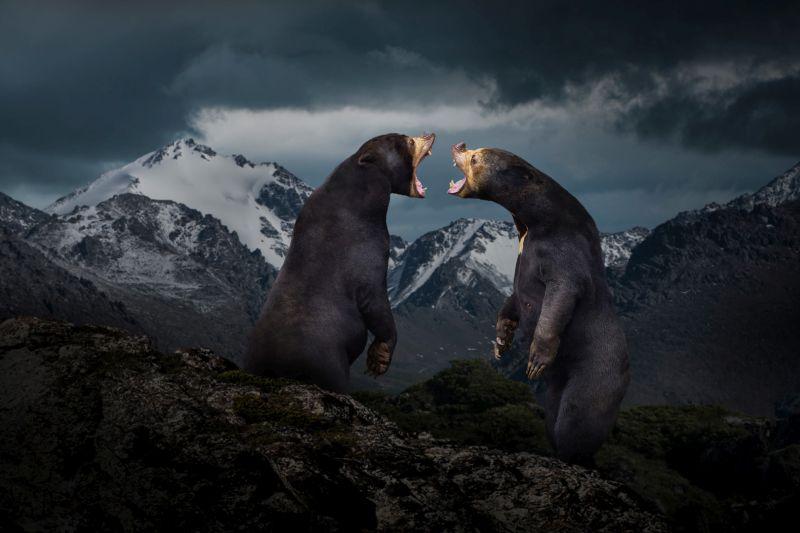 Roar To Each Other, Li  Yuwei , China