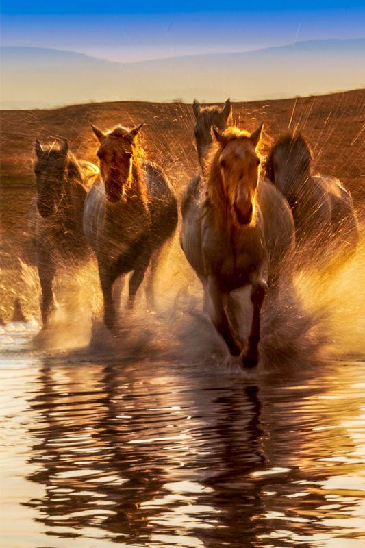 Horses Galloping, Weng  Youwei , China