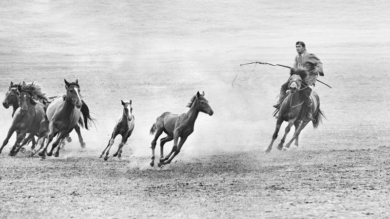 Horse Lassoing, Cheung  Sinkai , Australia