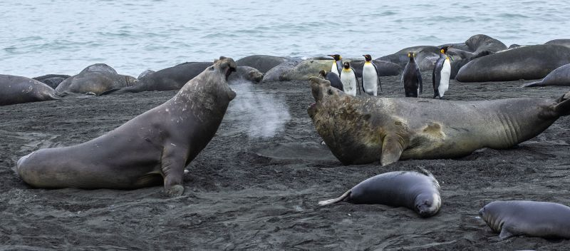 Elephant Seals, Bailey  Richard , Usa