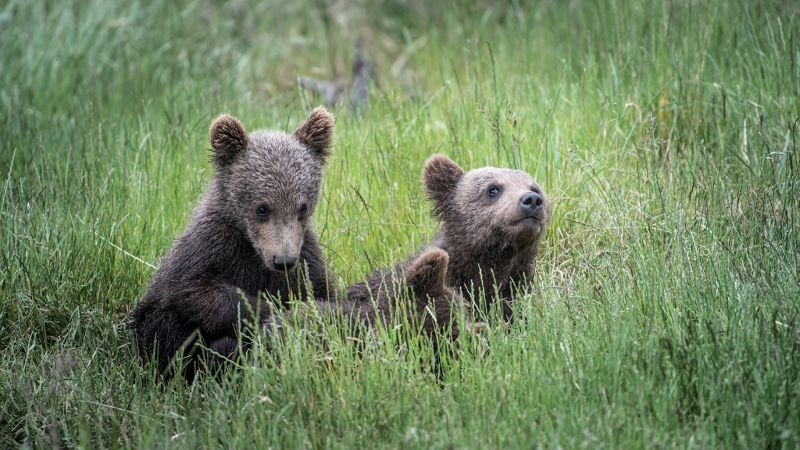 Relaxing Cubs, Halvas-nielsen  Herdis , Germany