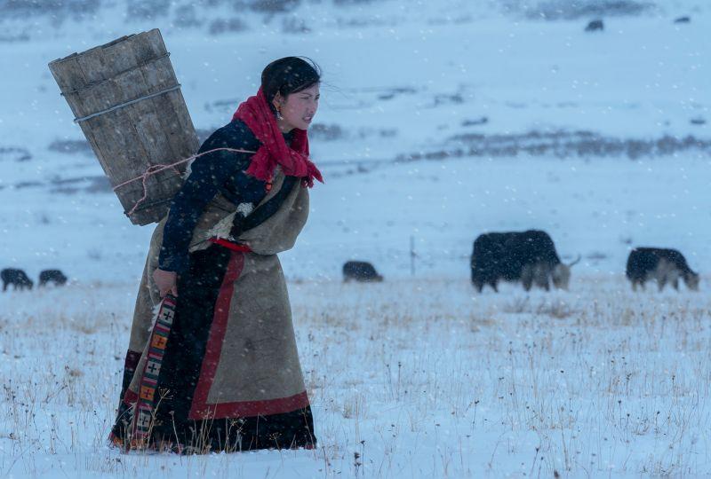 Elfin In The Snowfield, Yan  Hong , China