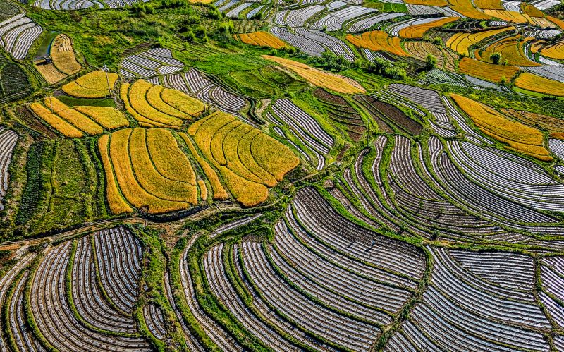 Colorful Terraces, Li  Xingye , China
