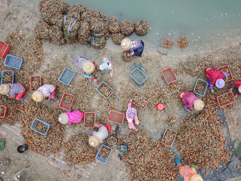 Marine Products Harvest, Li  Xingye , China