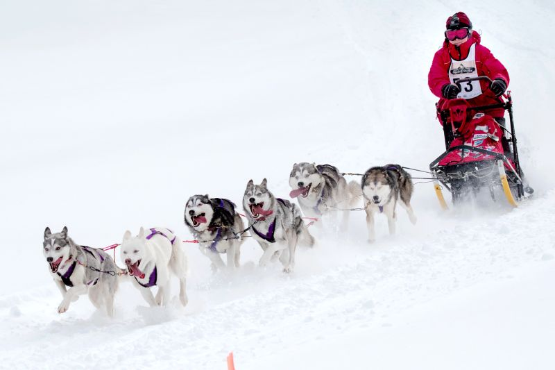 Dog Sled Race D08, Lee  Peter , Canada