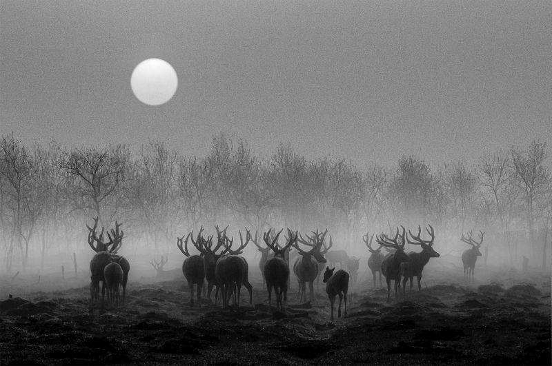 Elks, Yu  Jurong , China