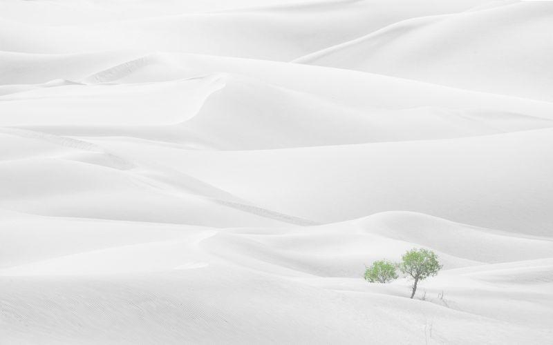 Spring Desert, Kuai  Zhengdong , China